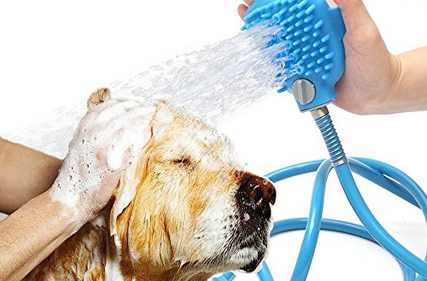 شستشوی سگها