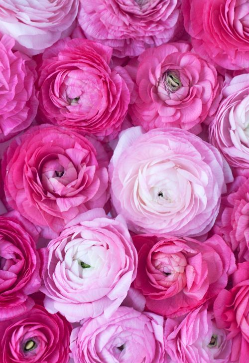 گلاب-خانومی